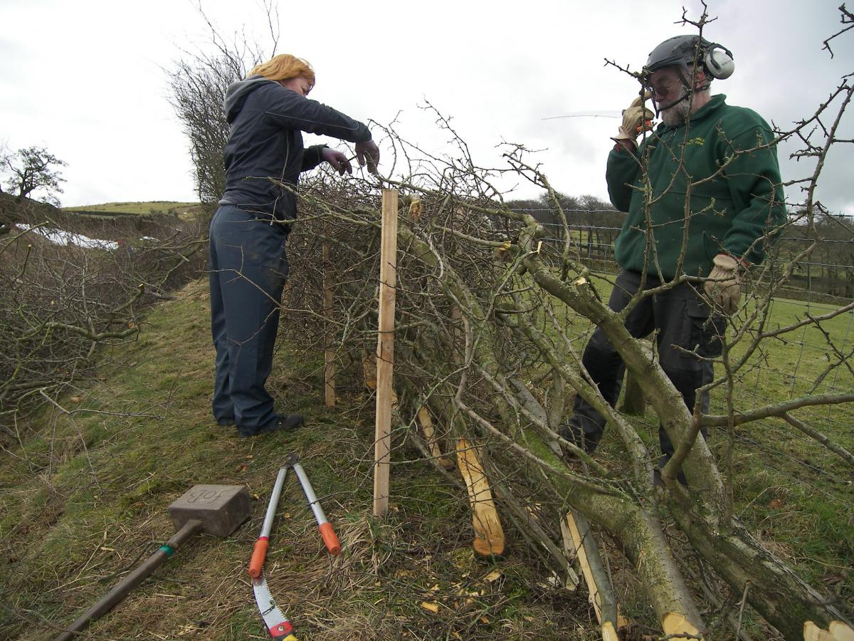 Hedge Laying course (Forest of Bowland AONB)