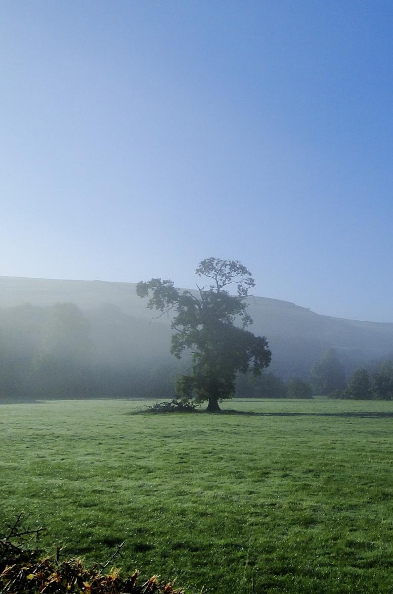 Morning mist at Whitewell