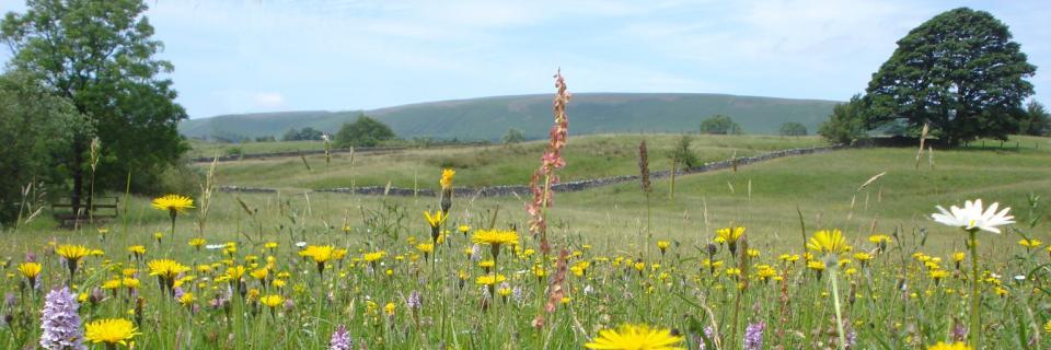 Bowland Hay Meadow