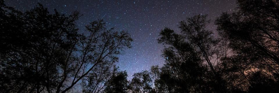 night sky over gisburn forest