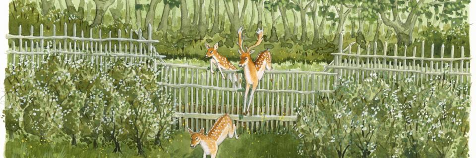 Salter deer leap illustration by Jennie Anderson