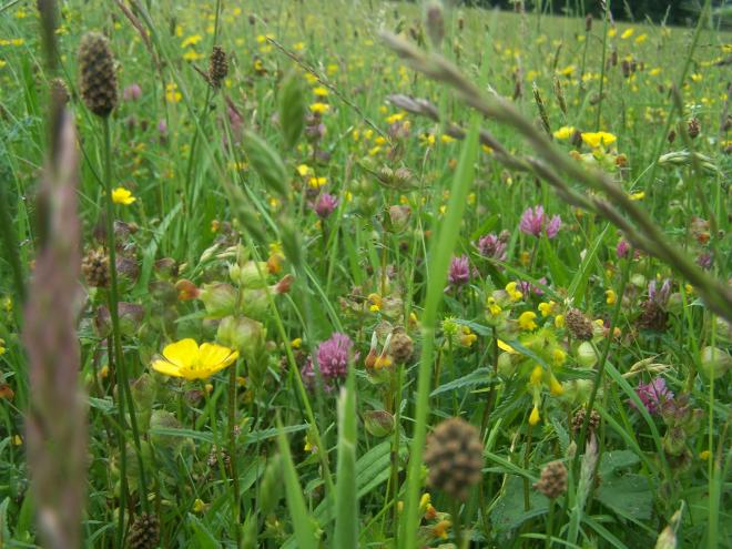Bell Sykes Hay Meadow