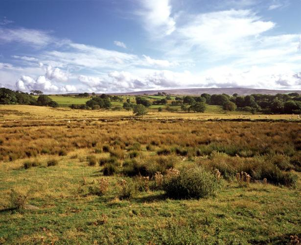 Rush pasture, image copyright Charlie Hedley