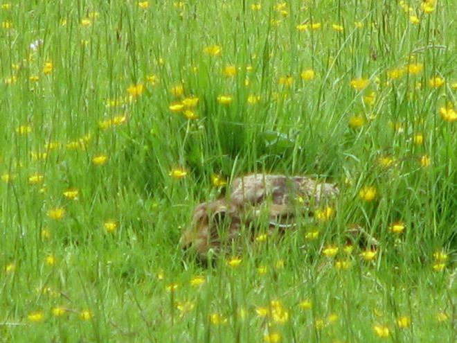 Hare image copyright David Bennett
