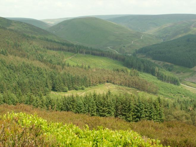 Forestry in Brennand Valley - image copyright Jon Hickling