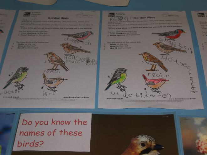 RSPB Education Project