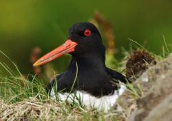 Birds of Bowland