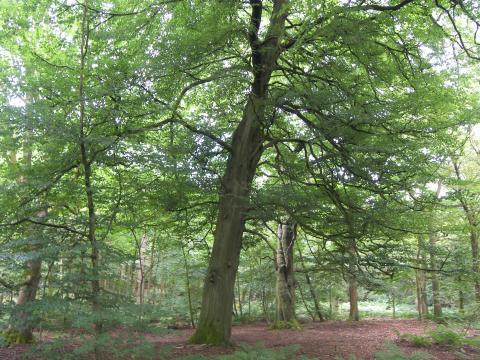 Black Hill Wood, Sabden