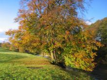 Autumnal tree, River Calder ©  Graham Cooper